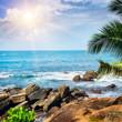 Beach tropical ocean , palm trees and sun.