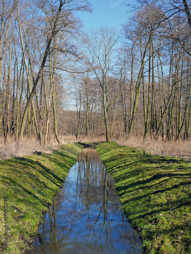Strumień płynący przez las - 199902744