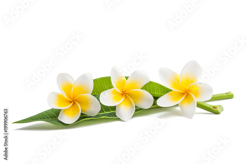 Aluminium Plumeria Frangipani flowers and leaves