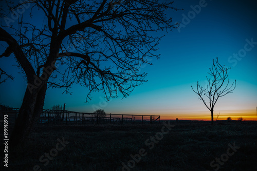 Silhouette of tree branches on an old farm, dawn. © Andrii Zastrozhnov