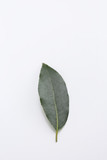 Single fresh laurel or bay leaf on a white, an aromatic culinary herb used as a seasoning in cooking