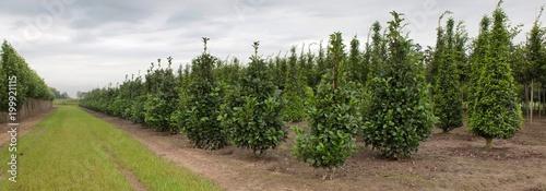 Tree nursery - 199921115