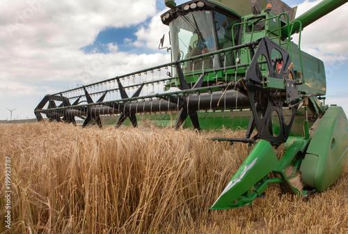 Harvesting grain. Combine. Summer