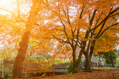 Foto op Canvas Herfst Rustic wooden bench under colorful autumn trees in Lichtentaler Allee park on the River Oos in Baden-Baden, Germany with the glowing warmth of the sun