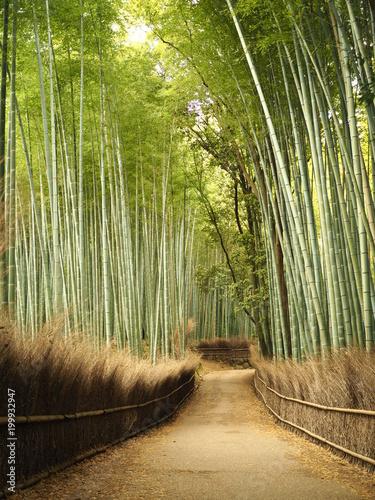 Fotobehang Kyoto 嵯峨嵐山での竹林の道
