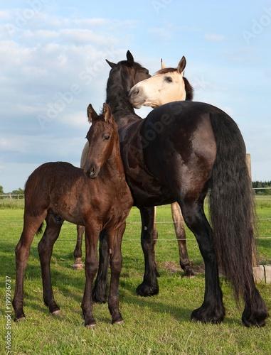 Fotobehang Paarden Horse foal