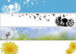 Dandelion Website Banner in Four Different Versions - Colored Spring Illustrations, Vector