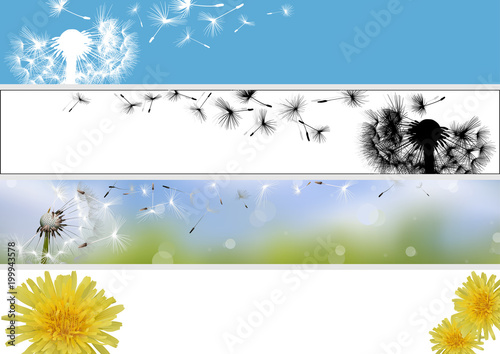 Fototapeta Dandelion Website Banner in Four Different Versions - Colored Spring Illustrations, Vector