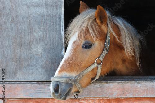 Fotobehang Paarden Лошадь, крупным планом, выглядывает из стойла