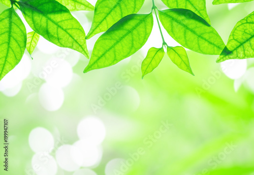 Closeup fresh green leaves on blurred abstract light spot bokeh in the park background with copy space - 199947107
