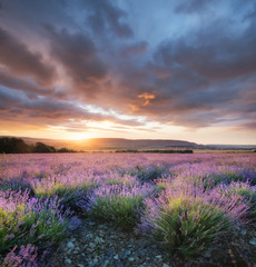 Lavender in the mountain valley during sunset. Beautiful natural landscape in the summer time