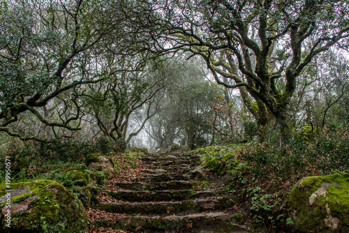 Fotobehang Weg in bos Buçaco, Portugal