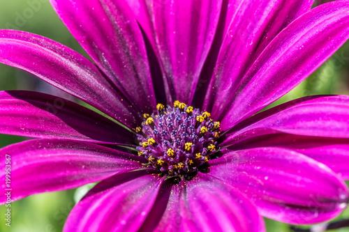 Flower - 199953567