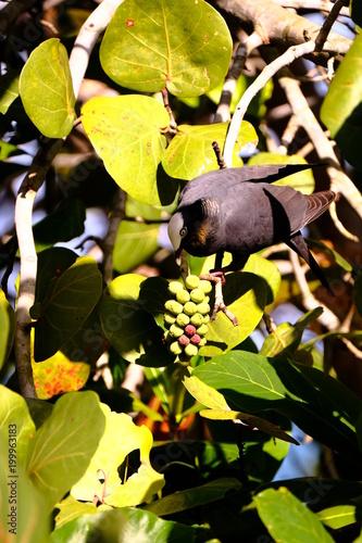 Foto op Plexiglas Natuur bird in tree eating grapes