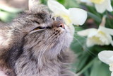 Cat portrait in spring