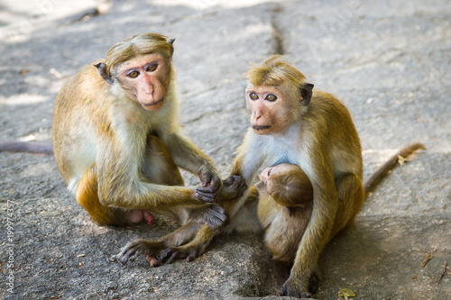 Fotobehang Aap Monkey family protects the baby