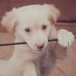 Cucciolo gioca - 199979736