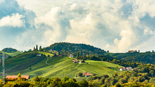 Deurstickers Wijngaard Austria Vineyards Leibnitz area south Styria travel spot