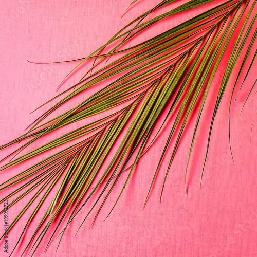 Abstrakcjonistycznego minimalizmu kolorowy papierowy tło i gałąź roślina.