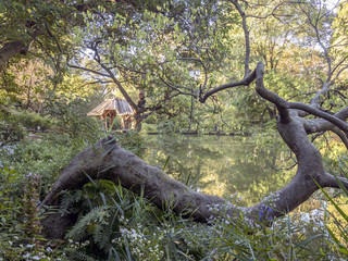 Central Park, New York City, sumer