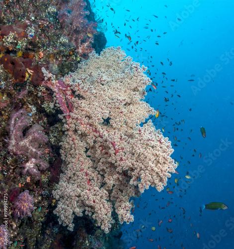 Keuken foto achterwand Bali Coral reef off coast of Bali