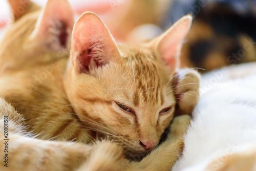 Śliczne koty śpią razem, zwierzęta domowe w domu