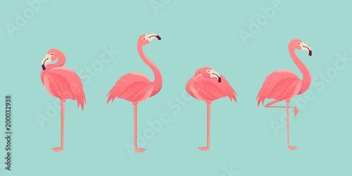 Set of flamingos isolated on background. illustration.