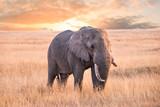 An Elephant in serengeti national park, tanzania