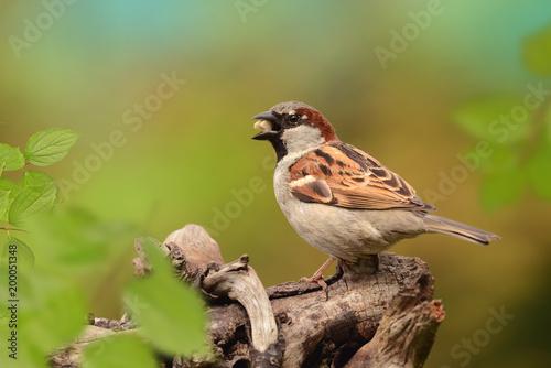 Vögel 79