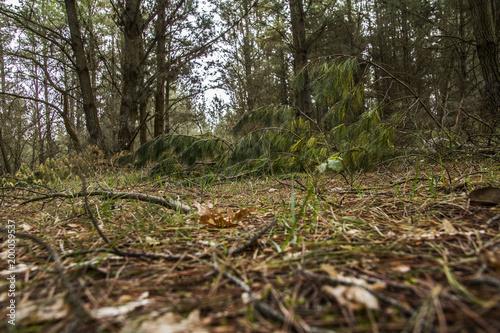 Fotobehang Weg in bos Bosque
