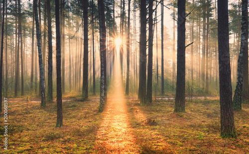 Zdjęcia na płótnie, fototapety na wymiar, obrazy na ścianę : Sunny autumnal scene