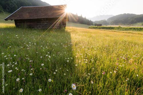 Wschód słońca nad polem kwiaty i drewniana chata w lecie