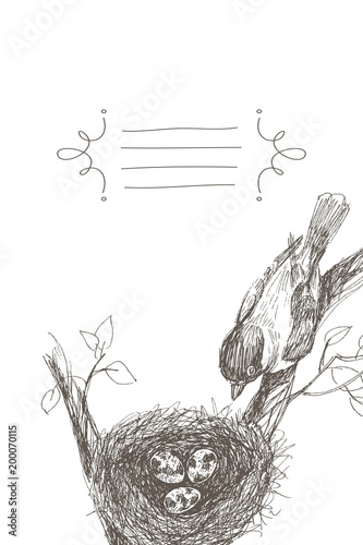 Vector Illustration Of Hand Drawn Nest With Spotted Eggs And Bird Graphic Style Beautiful