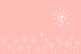 Dandelion field with white flowers and pink background. Simple floral background graphic.