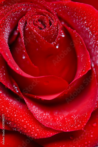 Rose flower background concept - 200080371