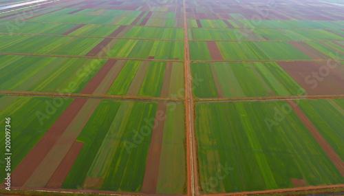 Foto Murales Yeşil Ekin Tarlaları