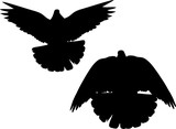 two flying pigeons isolated black silhouettes - 200104786