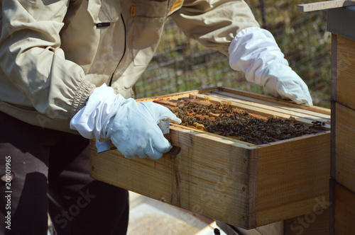 Aluminium Bee Beekeeping at our little family farm.