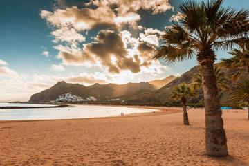 palm trees Playa de las Teresitas Beach, Tenerife