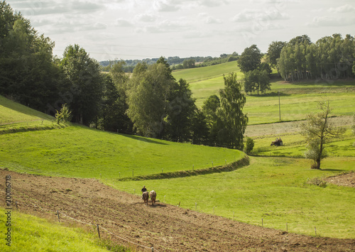 Fotobehang Gras field