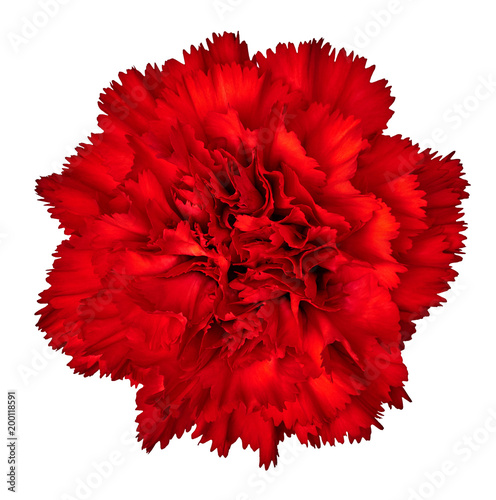 Fotobehang Rood traf. Red carnation flower isolated on white background. Close-up. Element of design.