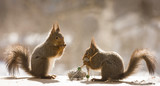 red squirrels holding knitting needles - 200121148