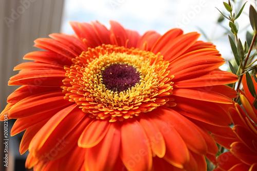 Aluminium Gerbera Gerbera Red Flower