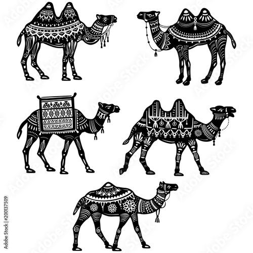 Fototapeta Set of stylized figures of decorative Camels