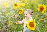Child in sunflower field. Kids with sunflowers.
