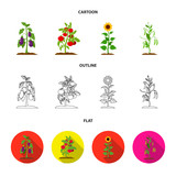 Eggplant, tomato, sunflower and peas.Plant set collection icons in cartoon,outline,flat style vector symbol stock illustration web.