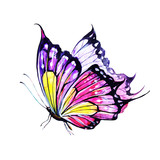 Fototapeta Motyle - butterfly,watercolor,on a white © aboard