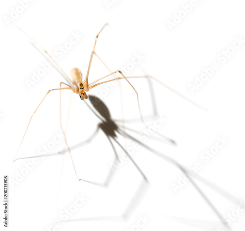 Spider with shadow on white background - 200213906
