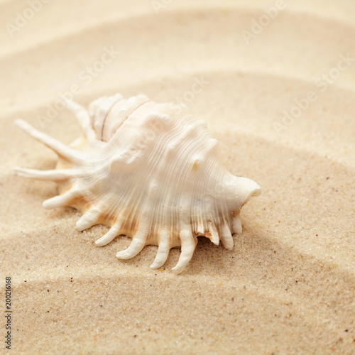 seashell on sand beach