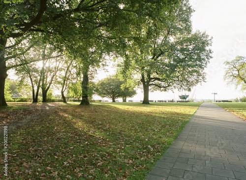 Foto Murales Sonnenstreifen im Park